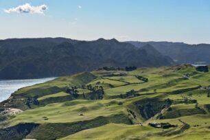 St David's team provides International game bird consultancy to New Zealand estate